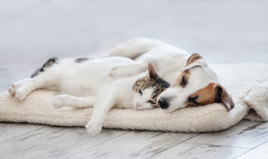 选对地板,幸福猫狗居家生活每天都过!